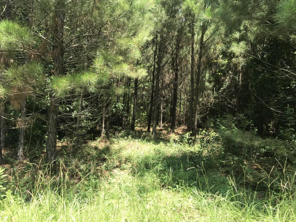 Deer Hunting, Timber Investment Opportunity in Morehouse Parish, LA