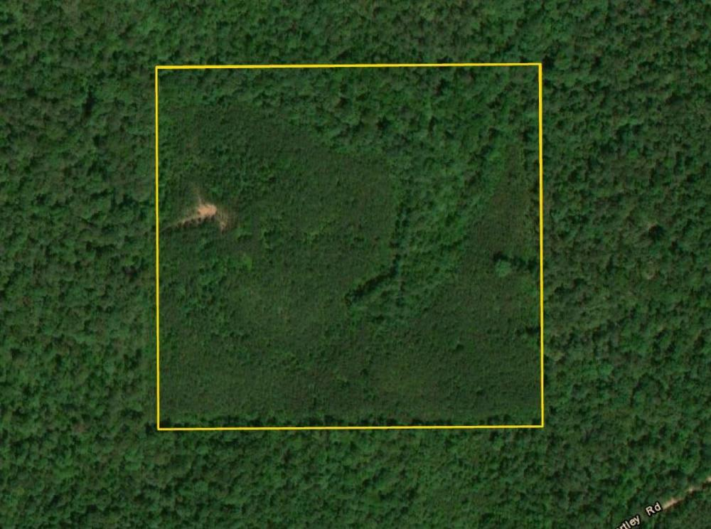 Hartley Road Timber & Hunting - Tract C in Perry County, AL