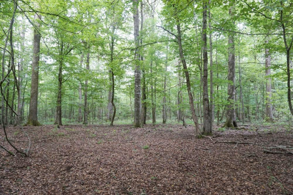 The Boligee Tombigbee River Timber & Hunting Investment in Greene County, AL