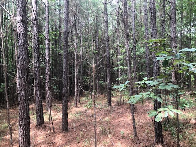 Choctaw 40 Homesite in Choctaw County, MS