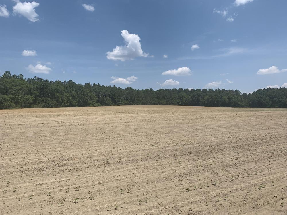 The Boggy Branch Farmland and Hunting Tract in Holmes County, FL