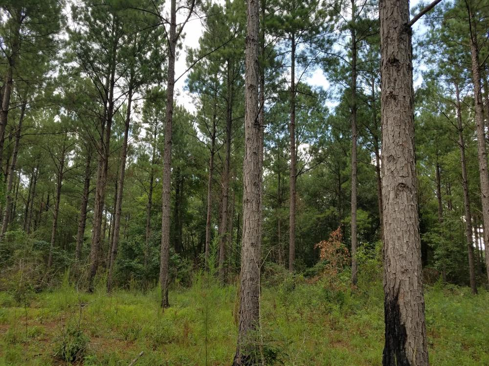 Zorn Road Timber Tract in Barbour County, AL