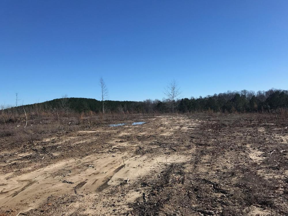 Etteca Road Homesite - Hunting in Fayette County, AL