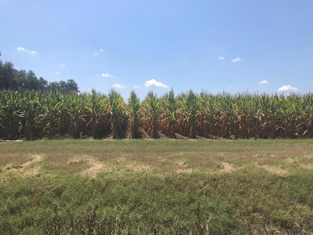 120+/- Acre Row Crop Farm in Lonoke County, AR