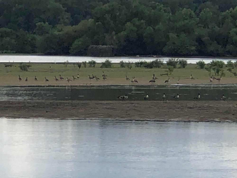 Beech River Duck Hunting and Homesite in Decatur County, TN