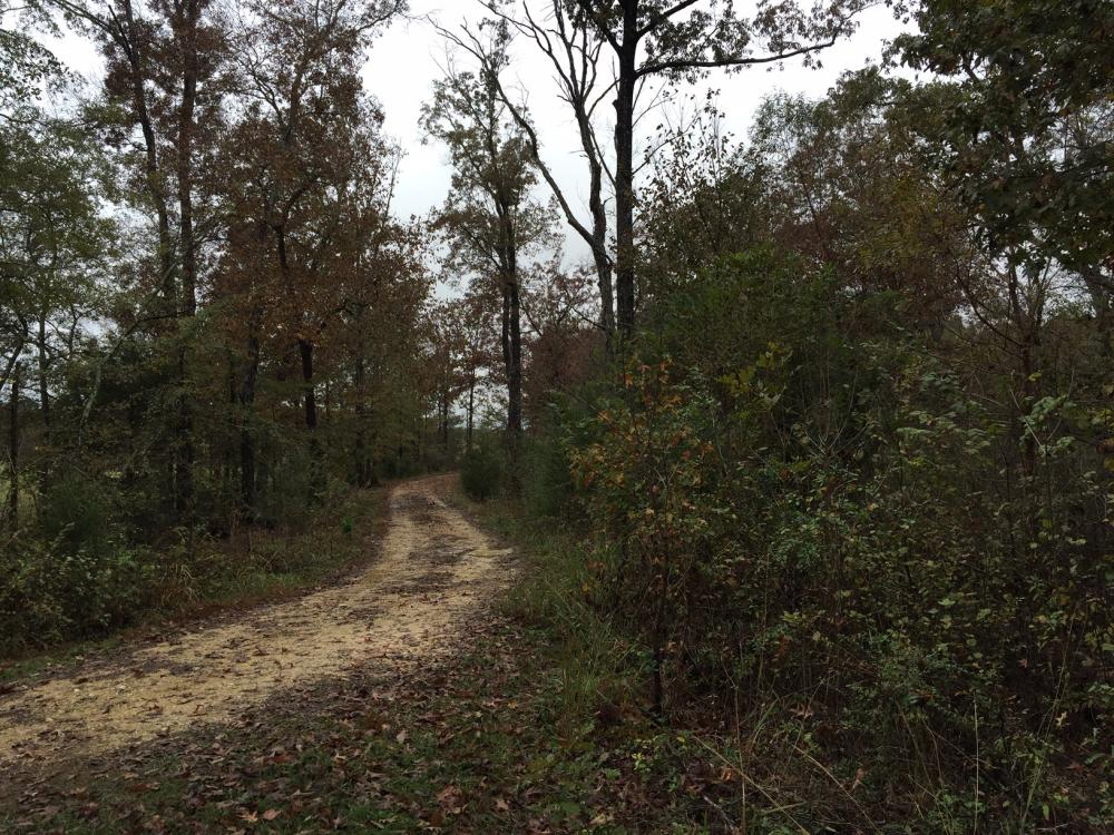St Clair CR-33 Homesite & Timber Tract in Saint Clair County, AL