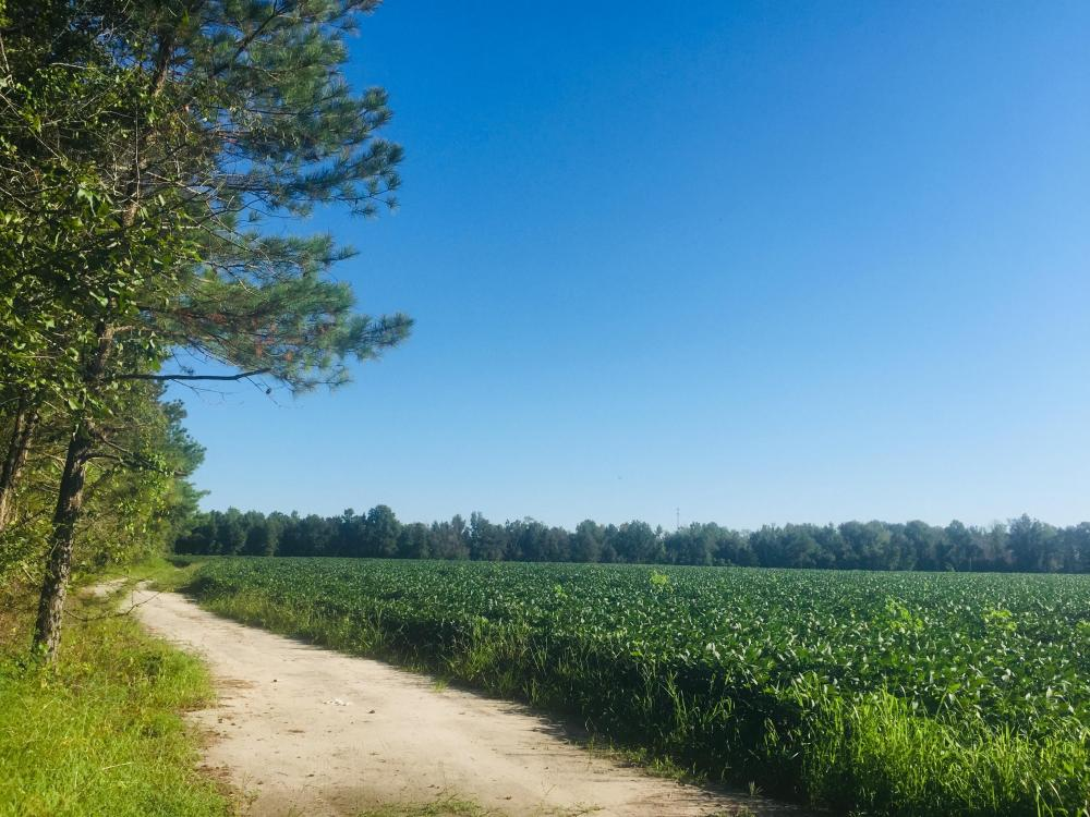 Sandy Grove Church Road 46.34 Acre Farm Tract in Lee County, SC