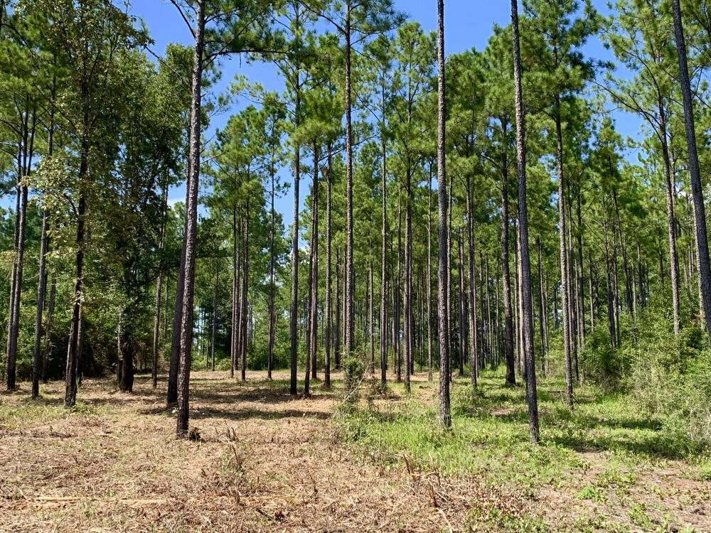 Wilmer Homesite and Recreational Tract in Mobile County, AL