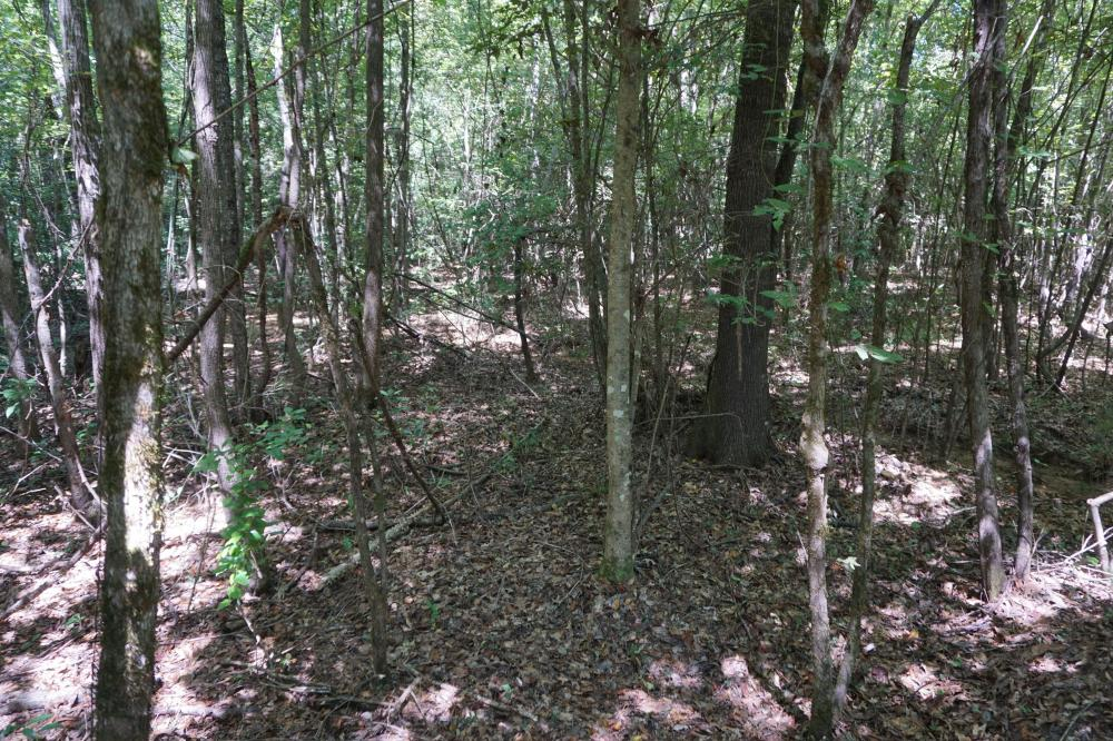 Greensboro Hubbard Road Hunting & Timber Tract in Hale County, AL