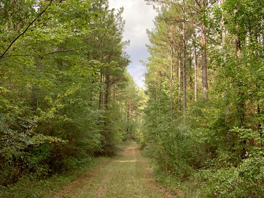 Pine Hill Above Average Timber & Hunting Investment in Wilcox County, AL