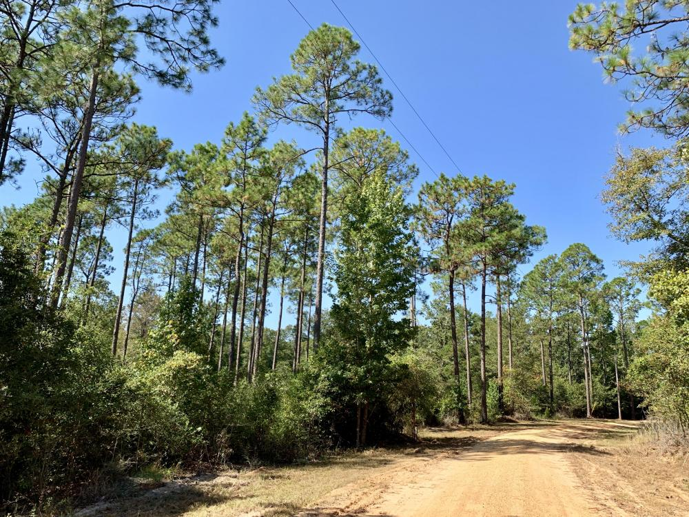 Cotton Creek Big Timber and Hunting Investment in Escambia County, FL