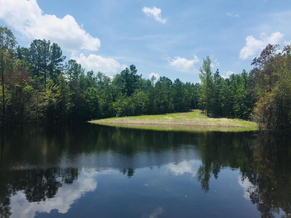Springvale Recreational Tract with Pond and Homesite in Kershaw County, SC