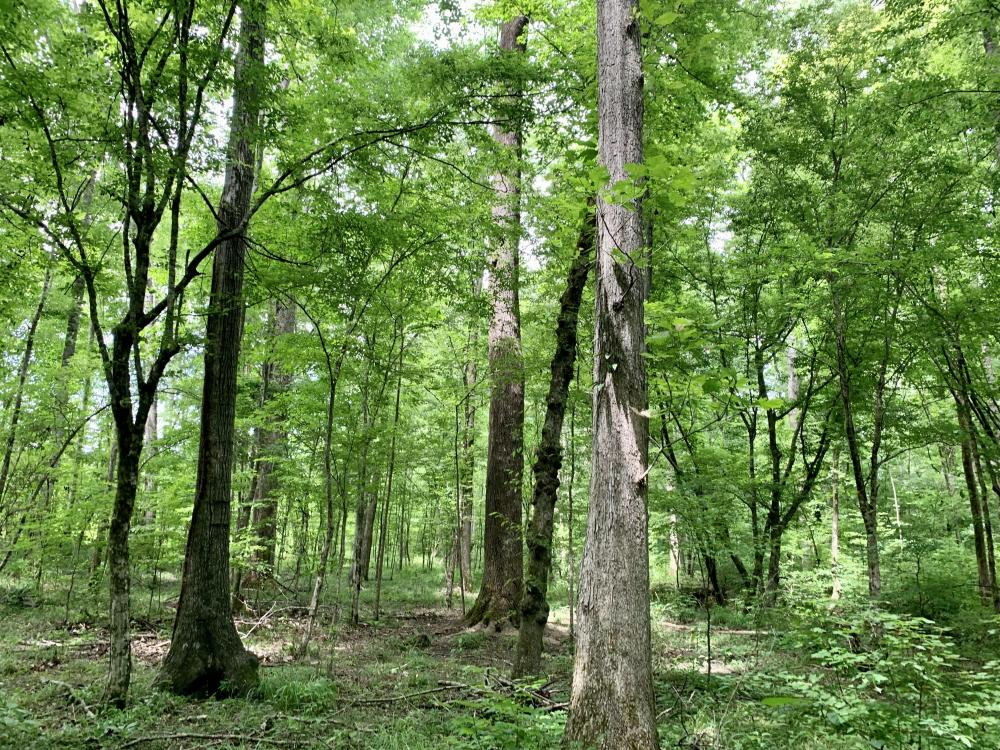 Yantley Creek Hunting and Timber Investment in Choctaw County, AL