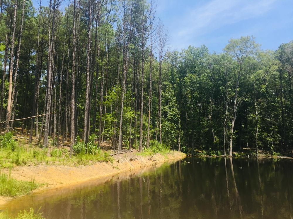 Shivers Green Homesite with Pond in Kershaw County, SC