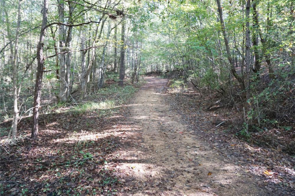 Esmer Thomspon Road Timber & Hunting Tract in Greene County, AL