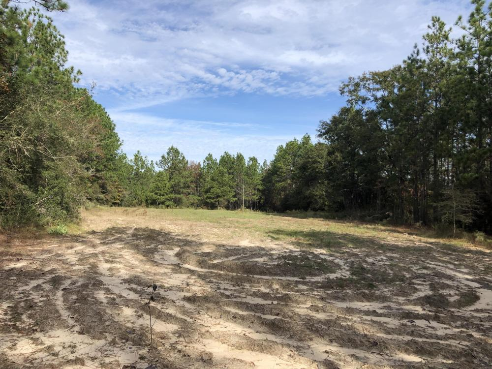 Sandy Ridge Rd Recreational and Hunting Tract in Mobile County, AL