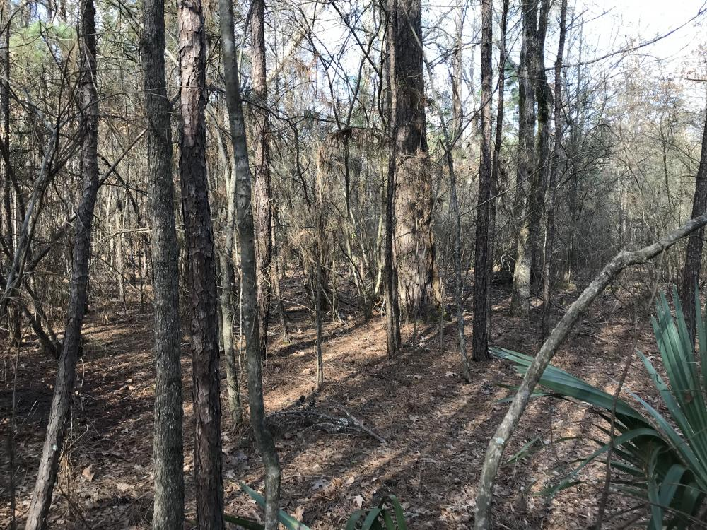 15 acres deer Hunting and Homeplace in West Carroll Parish, LA