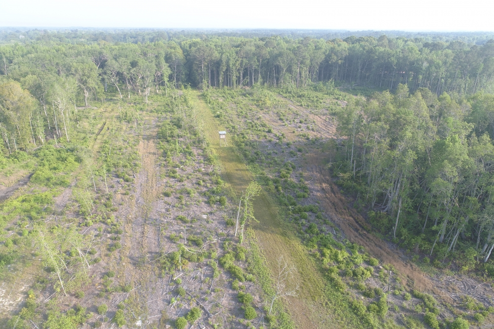 187.32 Acre Hunting & Timber Tract