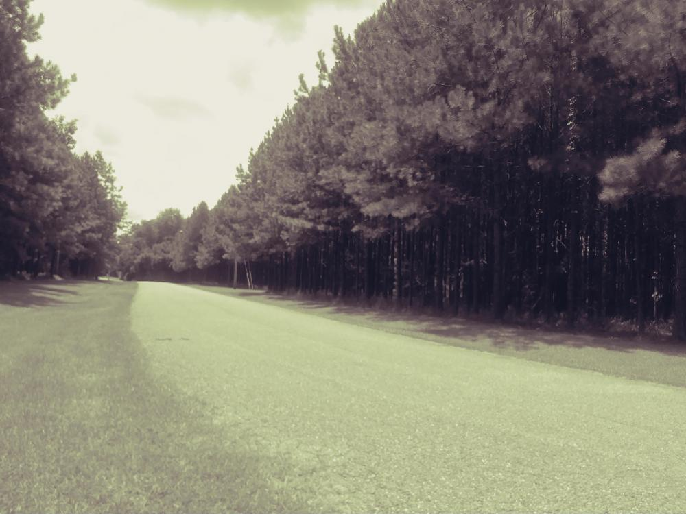 Natchez Hwy Wilmer Tract in Mobile County, AL