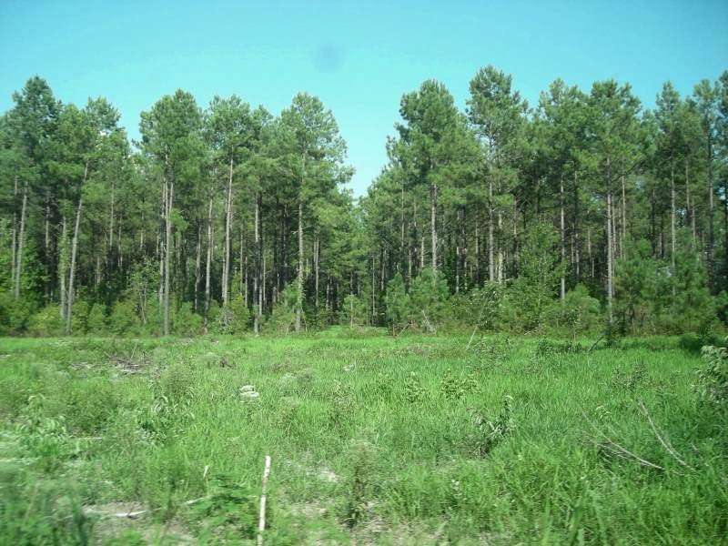 Bonneau Recreational and Timber Investment