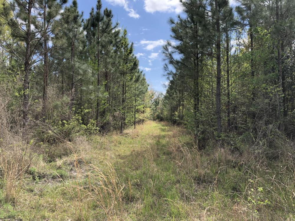 143.83 Acre Recreational Timber Investment in McIntosh County, GA