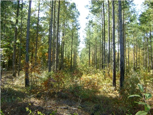 Swansea Hunting Land in Lexington County, SC