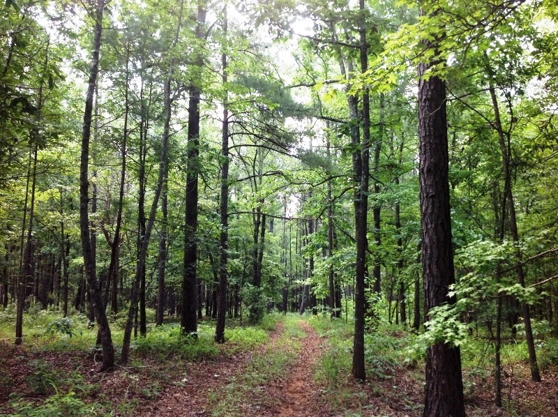 Timber Investment Tract