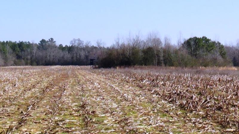 Farming & Hunting Land in Pickens County, AL