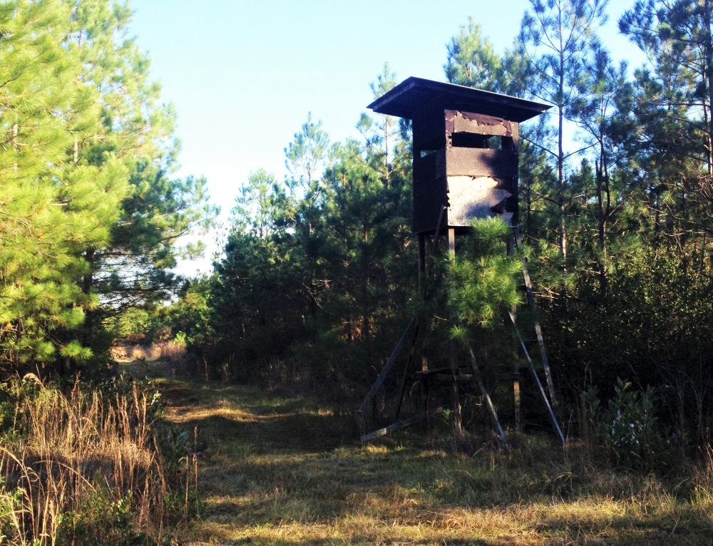 Loris Hunting Land In Horry County South Carolina