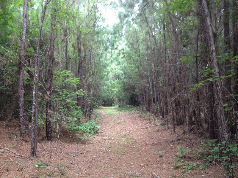 Midway Timber & Recreation Land in Liberty County, GA