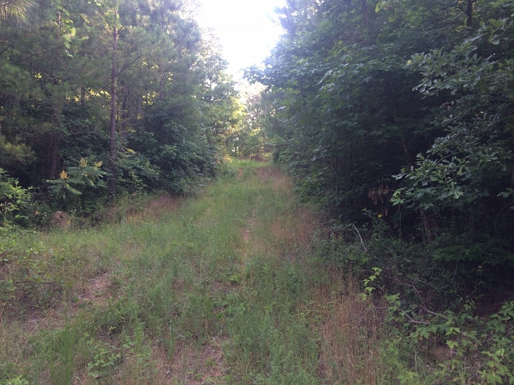 Moundville Hunting & Timber Tract
