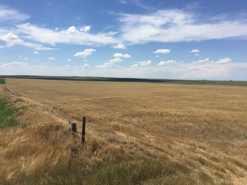 Kit Carson County Farmland/Cropland For Sale