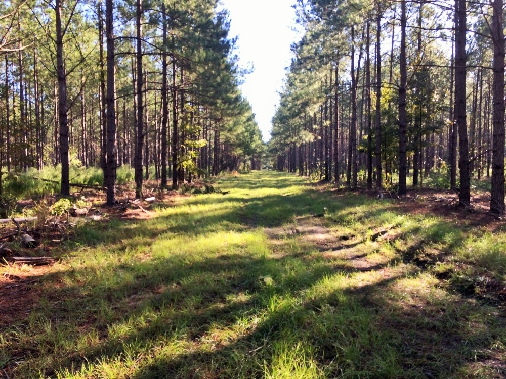 Bamberg Hunting and Timber Land in Bamberg County, SC