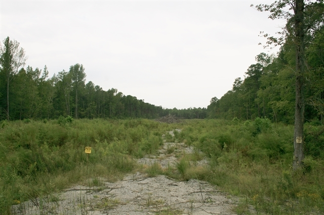 Windsor Hunting and Timber Homesite in Bertie County, NC