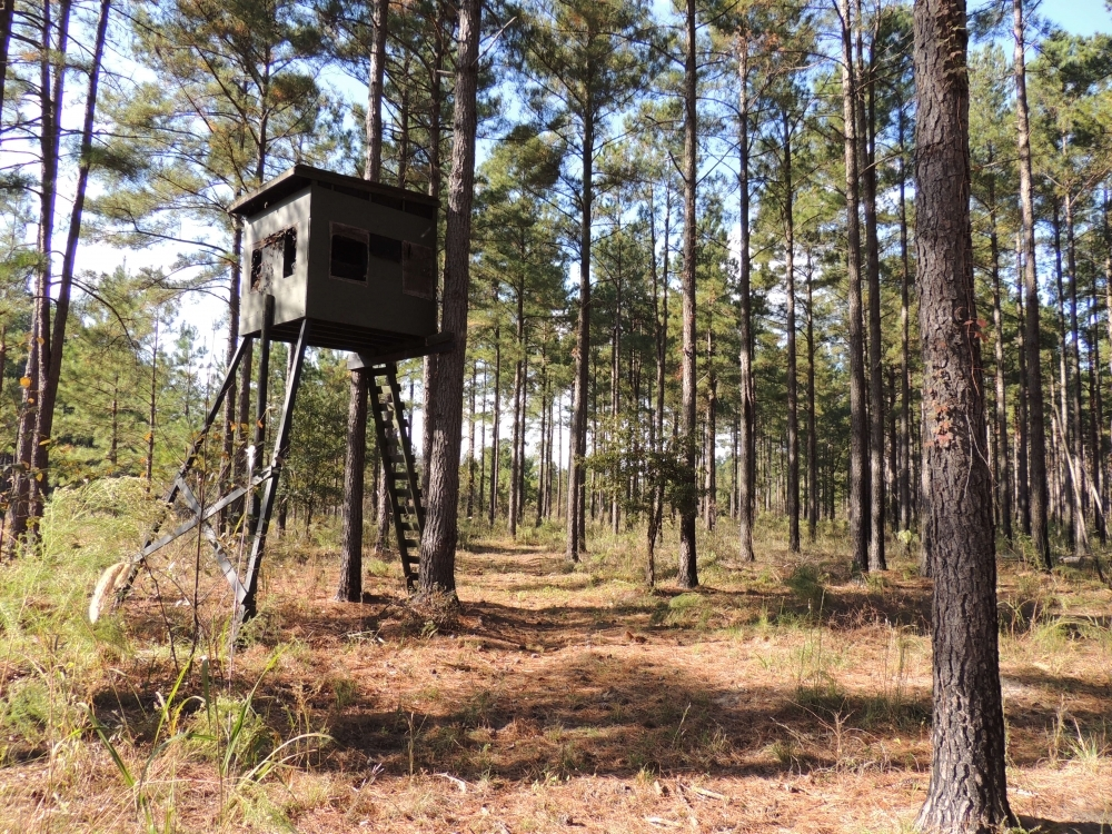Cypress Bay Hunting and Timber Tract