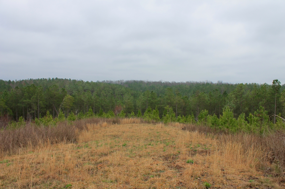 Hackleburg Tract