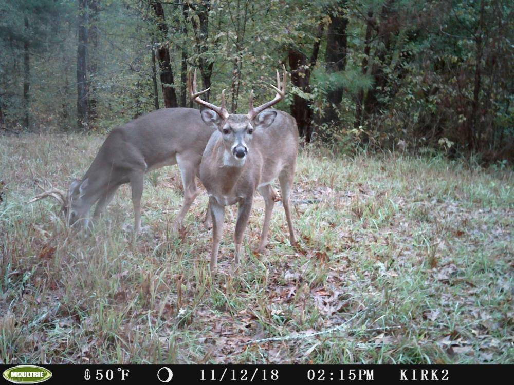 Copiah County hunting property in Copiah County, MS