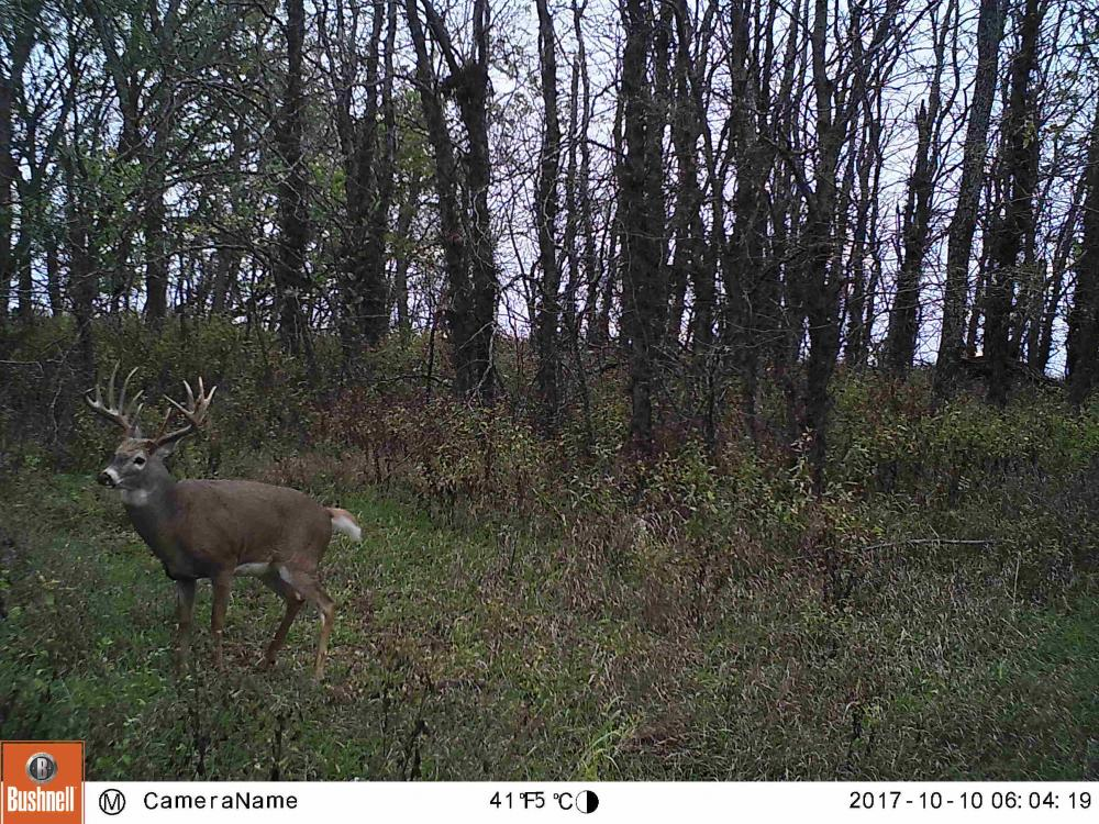 Trophy KS Whitetails with Income in Wabaunsee County, KS