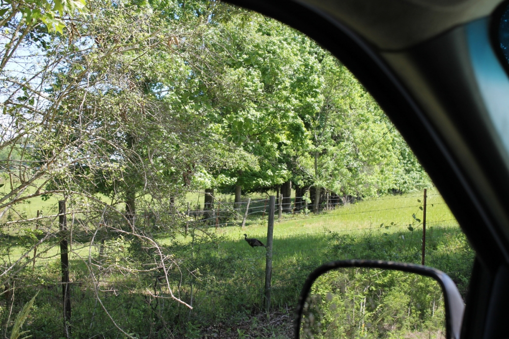 Earlville Road Investment Tract B in Mobile County, AL