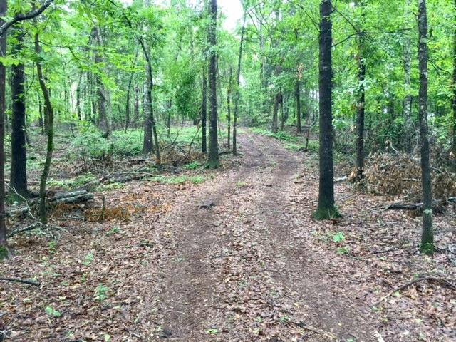 Schley County Hunting and Timber Tract