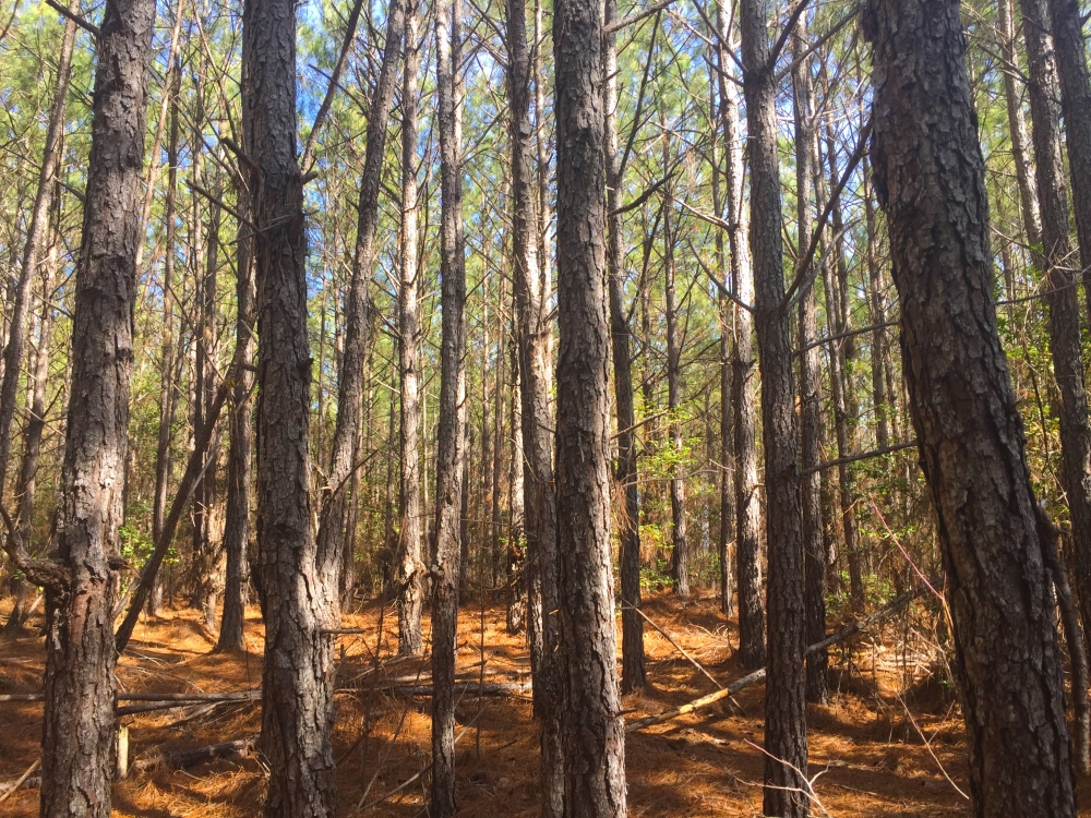 Jones Road 3.5 Acre Homesite
