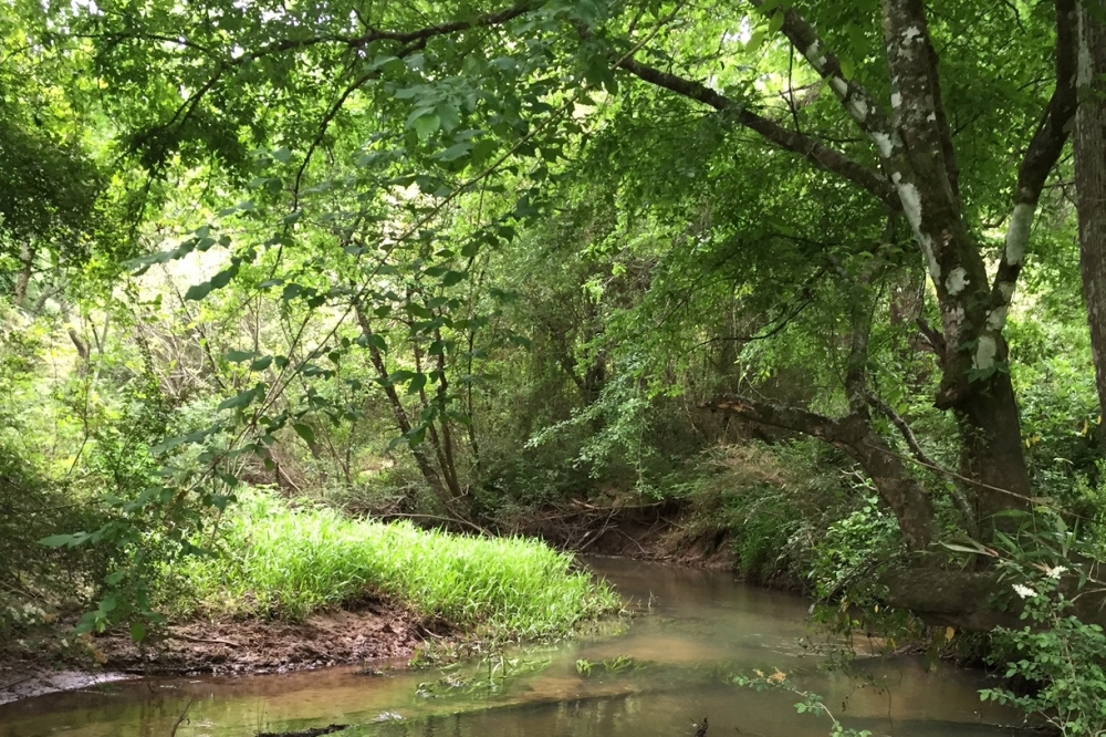 114 ac. Timberland and Hunting Tract  in Jefferson Davis County, MS