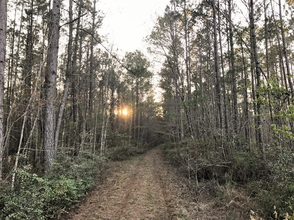 Ridgeland Hunting & Recreational Tract