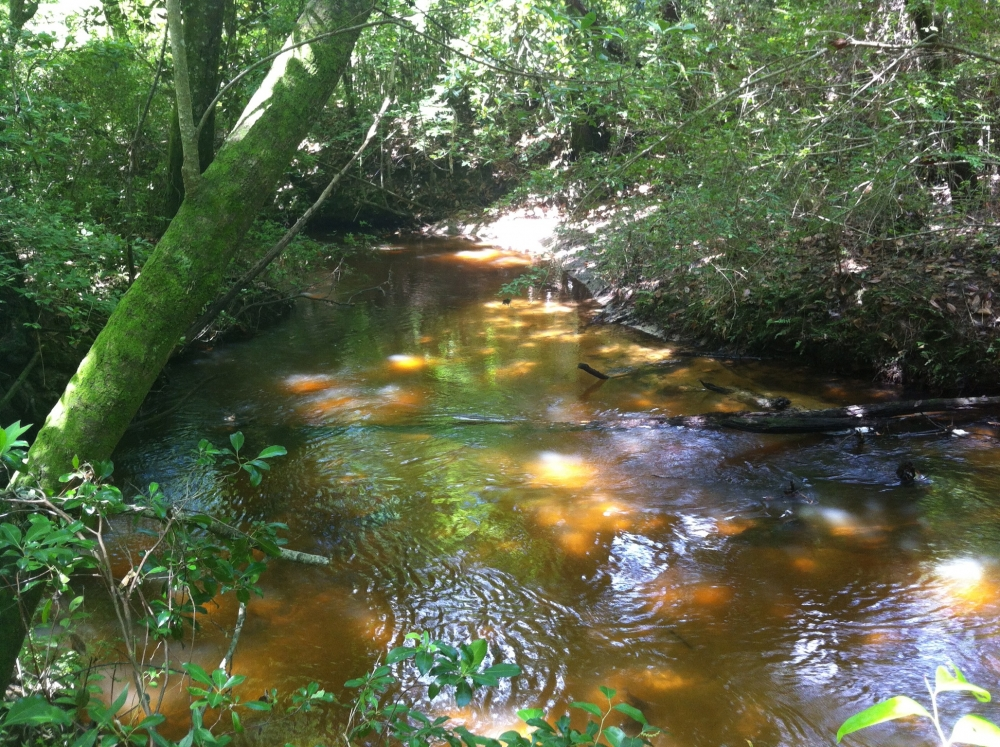 50 acres on Graves Creek in Marion County, MS