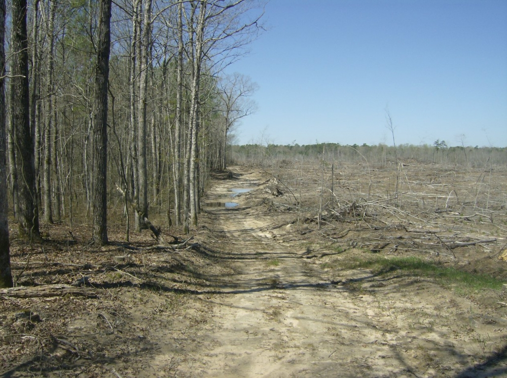 Cane Creek Timber and Hunting Tract 2 in Pulaski County, AR