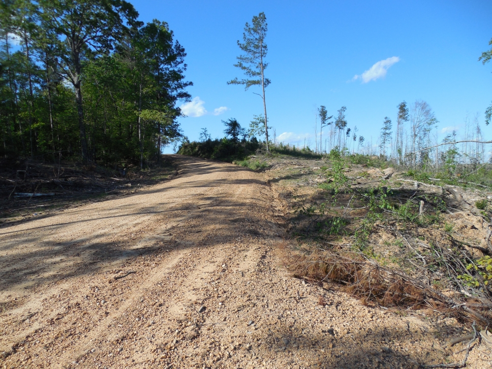 Archie Byrd 20 Acre Tract
