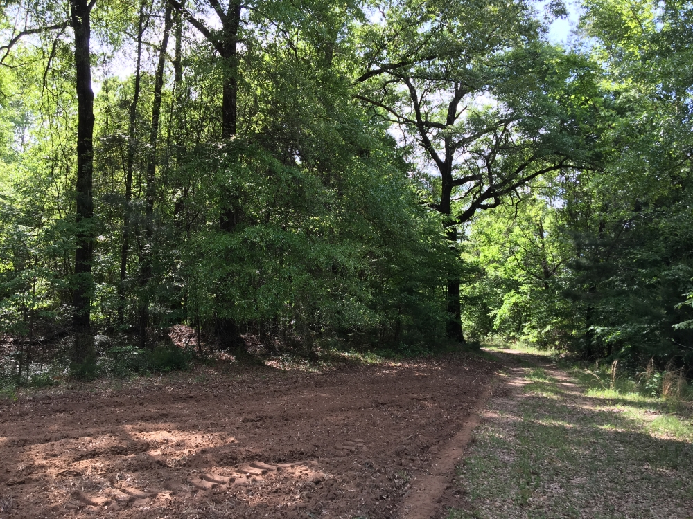 Jackson Hunting and Recreational Tract