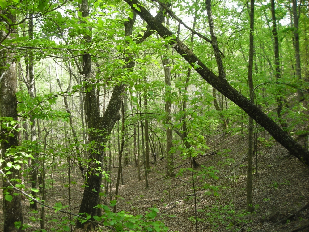 Hwy 278 Hunting, Home Site, Timber Investment