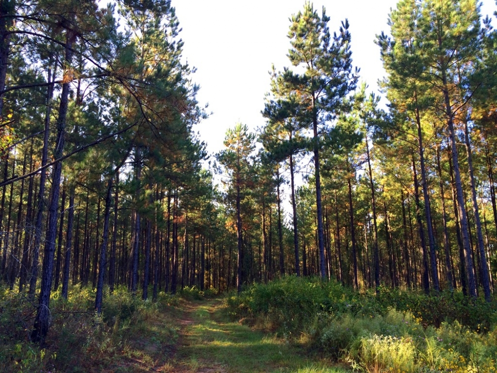The Windy Hill Flomaton Tract in Escambia County, AL