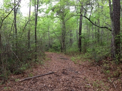 Recreation & Timber Investment Tract